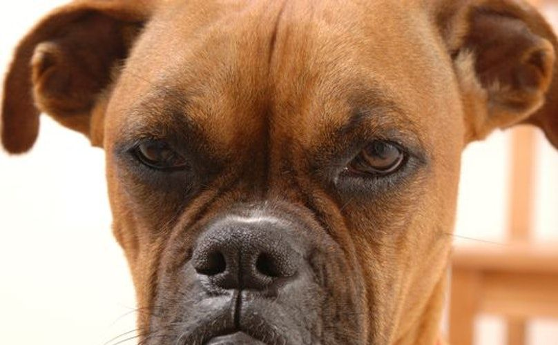 11 ments That Make Dog Owners Cringe