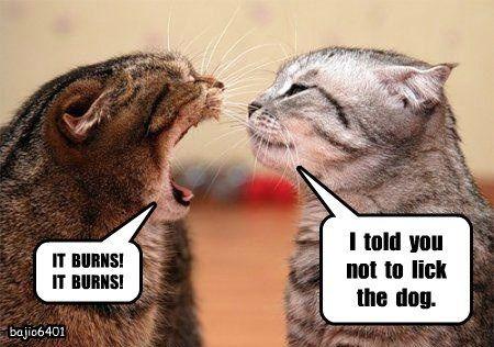 dogs lick burns caption Cats