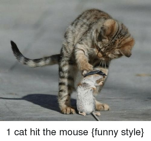 Cats Funny and Mouse 1 cat hit the mouse funny style