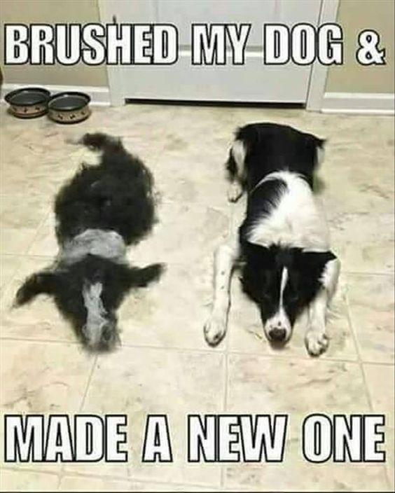 Probably the best of these memes weve seen That had to take some time dogs doglovers funny of dog memes