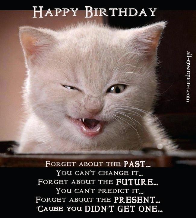 happy birthday cat ecard grumpy funny