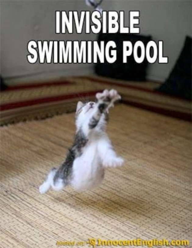 funny swimming pool pilation pictures of cute animals with