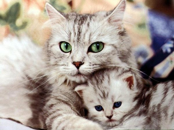 pictures of cute baby animals cute animal pictures with quotes cute animal pictures to draw funny baby animals cute animal pictures cartoon animal pictures