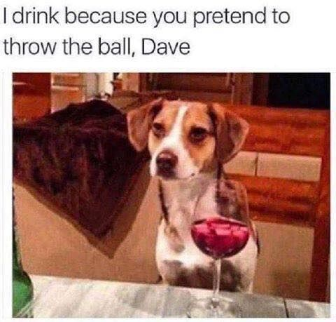 I drink because you pretend to throw the ball Dave Dog Memes Funny