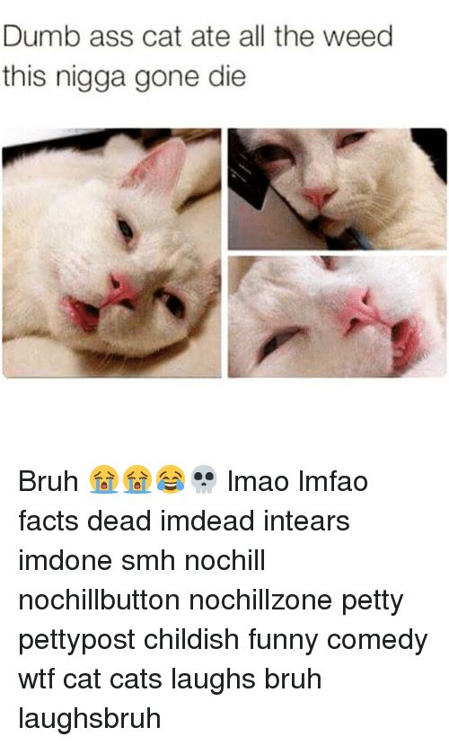 Ass Bruh and Cats Dumb ass cat ate all the weed this nigga