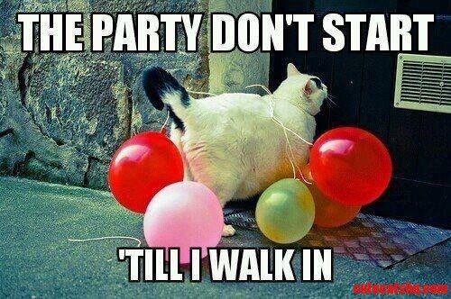 Cat Party Cat Party