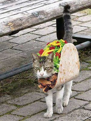 Can you see why he is pissed angry taco cat gee I wonder why and to make things worse outside in public