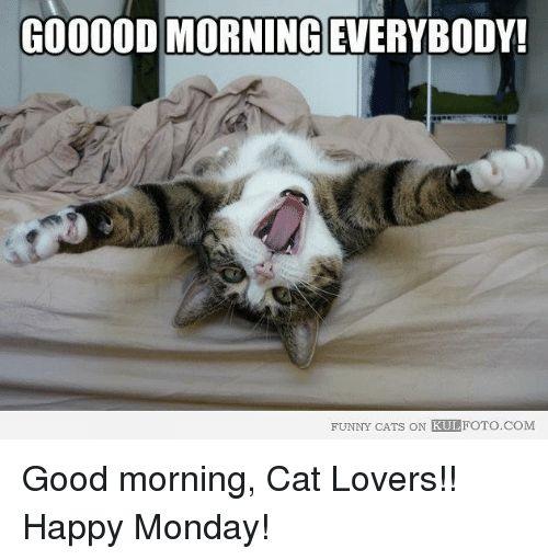 Memes 🤖 and Happy Mondays GOOOODMORNING EVERYBODY FUNNY CATS ON KULFOTO Good morning