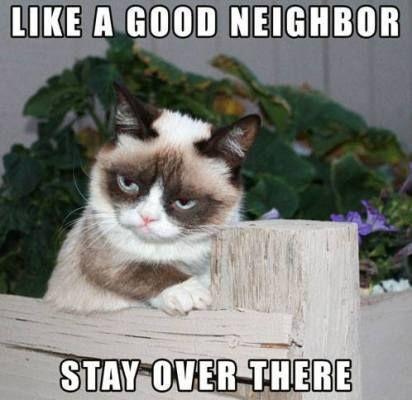 27 Grumpy Cat Funny Memes 16 Grumpy cat Grumpy cat memes