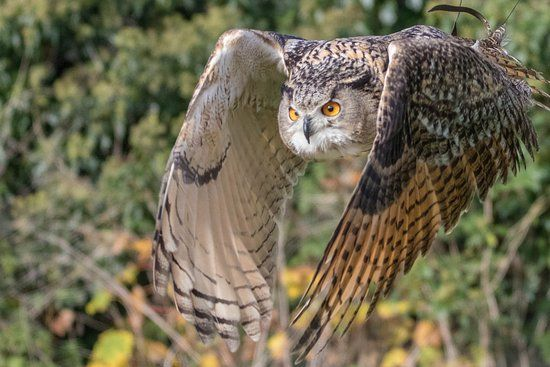 Walworth Castle Birds of Prey 2018 All You Need to Know Before You Go with s Walworth England