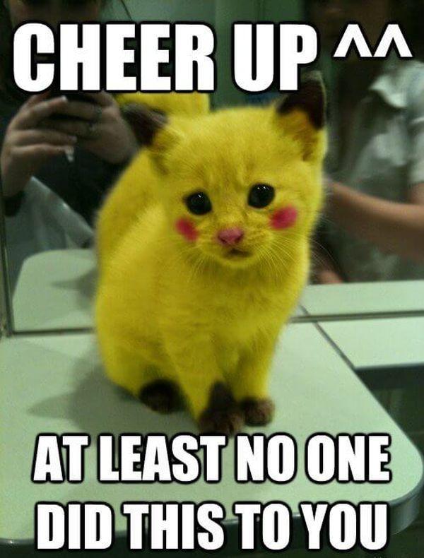 cheer up cat meme