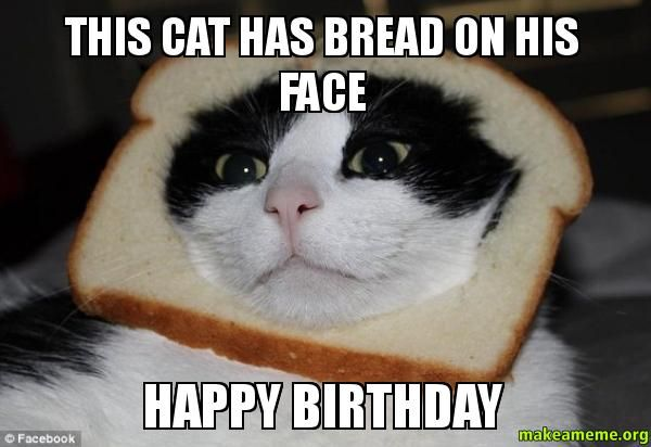Funny Happy Birthday Cat Memes