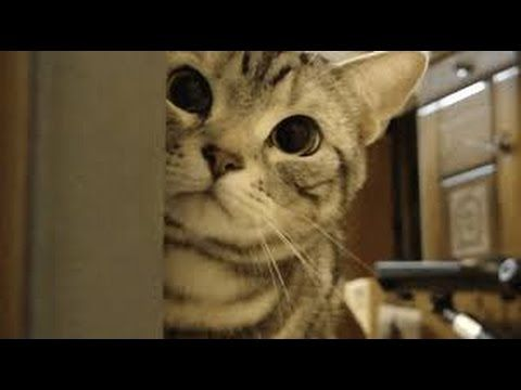 funny cat epic fails funny cat fails try not to laugh funny cat humor funny cat in wate