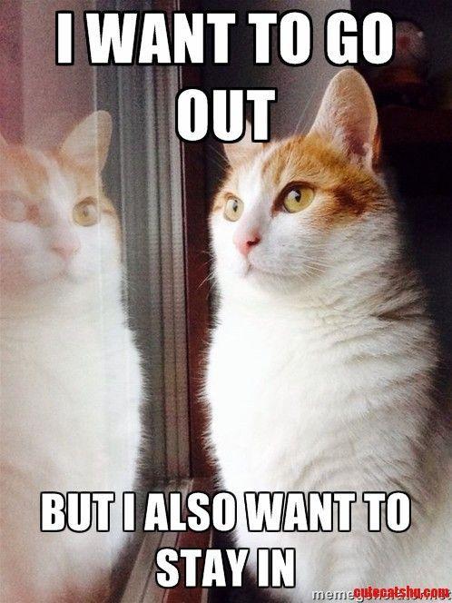 Top 30 Funny Cat Memes Humor quotes