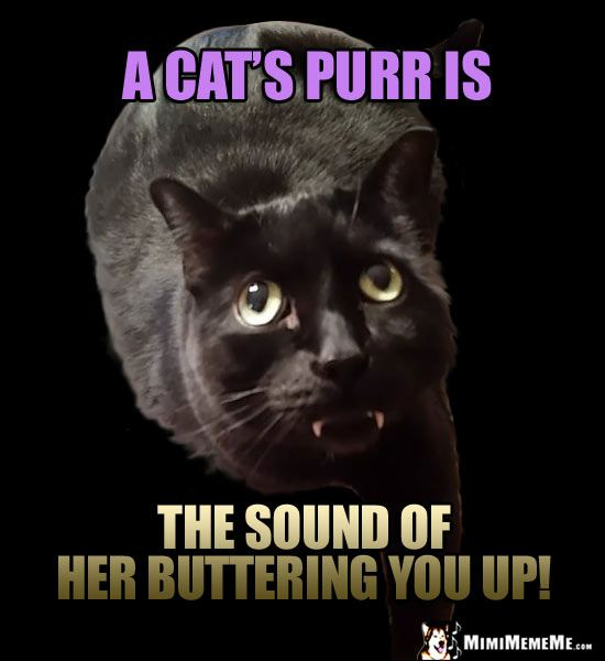Fang Cat Reminds You A cat s purr is the sound of her buttering you up
