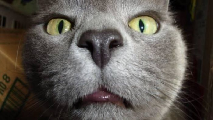 Get the Luxury Funny Close Up Cat Pictures