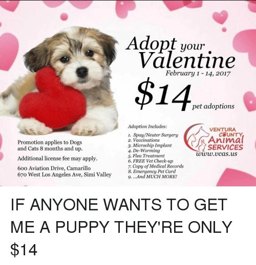 Funny Los Angeles and Aviation Promotion applies to Dogs and Cats 8 months