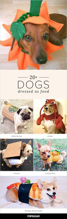 Dogs in Halloween costumes are pretty darn adorable as is dogs dressed as food are