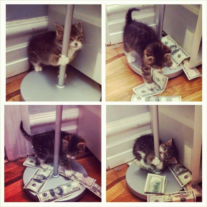 Funny cats part 102 40 s 10 s
