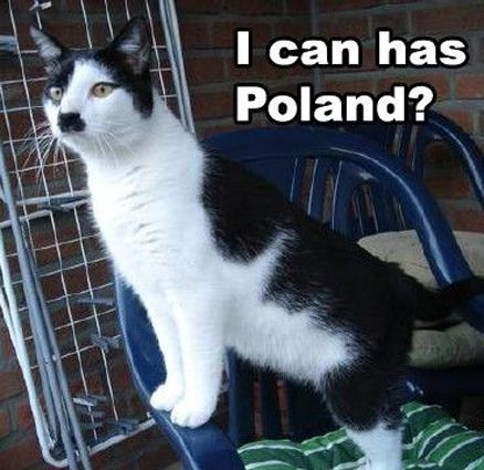 Get the Marvelous Funny Cat Memes Awkward