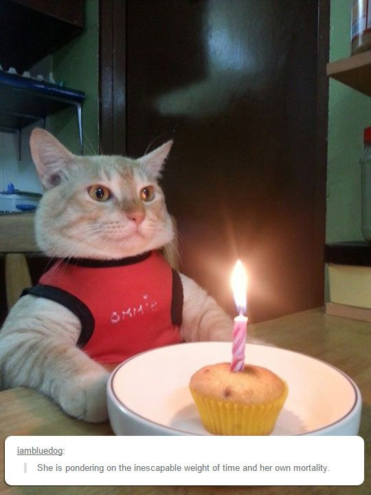 Funny Cat Birthday Cake