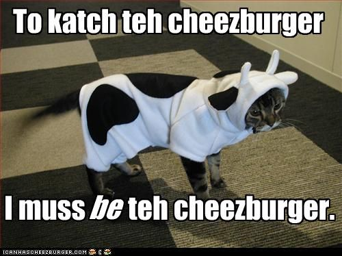 Cat Dressed Up as Cow Tricked