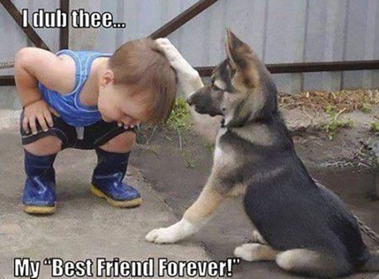Dog and baby friendship meme