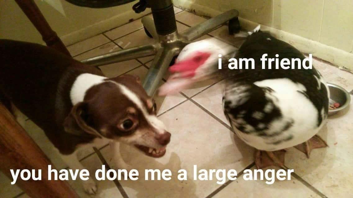 Get the Marvelous Funny Dog Memes Bork