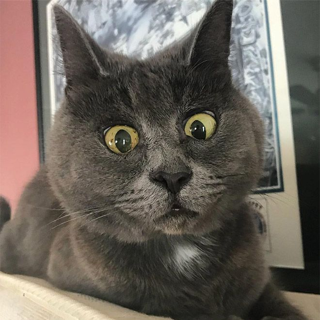 Hilarious face of a surprised cat