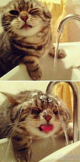 Cute Baby Animals Funny Animals Cute Baby Cats Funny Cats