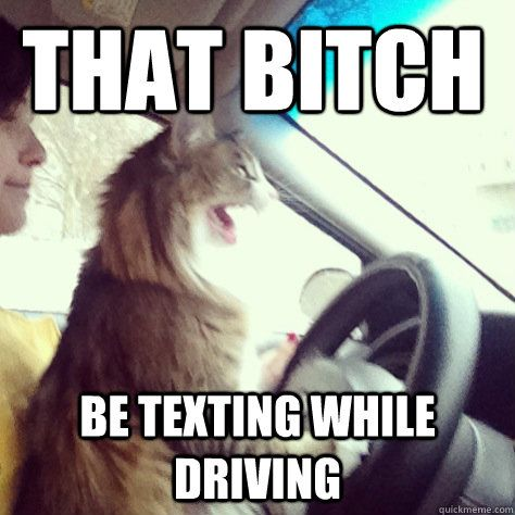 Get the New Funny Cat Memes Driving