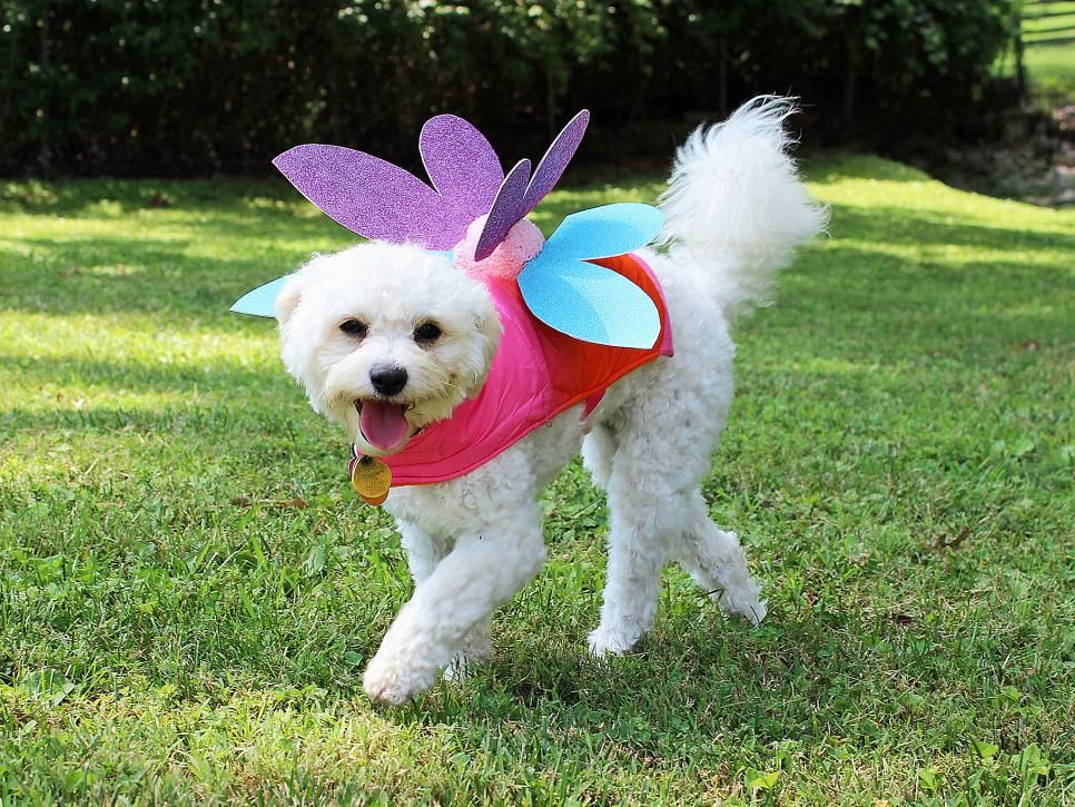 19 DIY Pet Costumes for Halloween