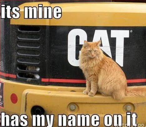 funny cat saying some thing