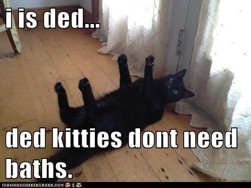 dead Cats captions bath ded