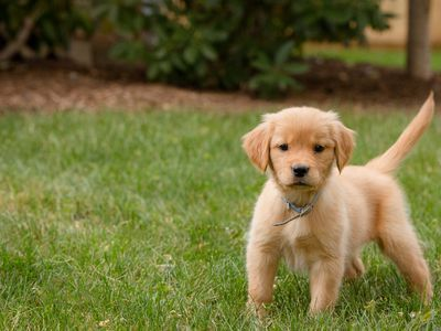 Fearful Puppy Learn What You Can Do to Make Them Less Scared