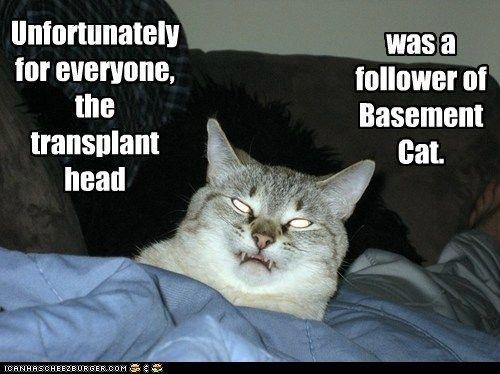 basement cat follower head transplant unfortunately
