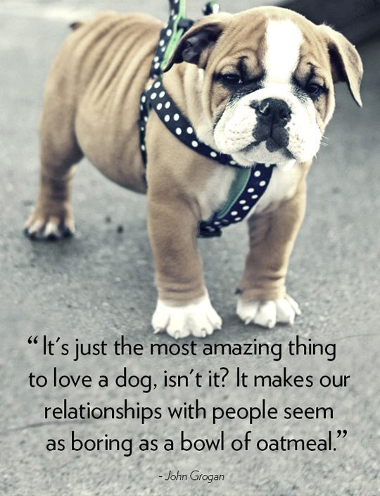 Appreciate the special dogs in your life with these inspirational dog quotes Tell great words about your pooches using the 33 most popular quotes about the