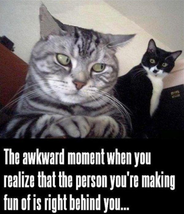 Funniest Cat Memes Ever