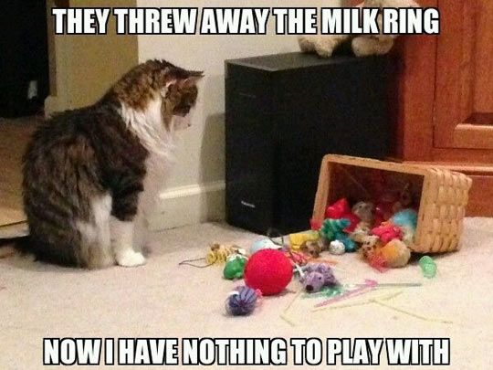 The best of first world cat problems…