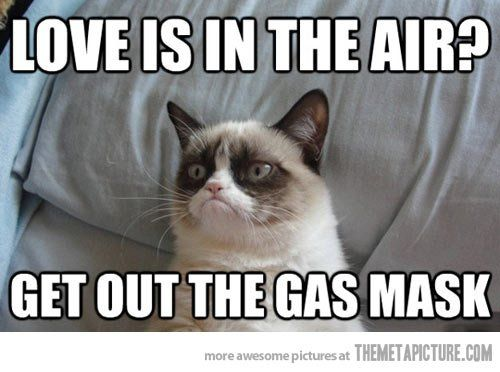 Funny grumpy cat love pillow