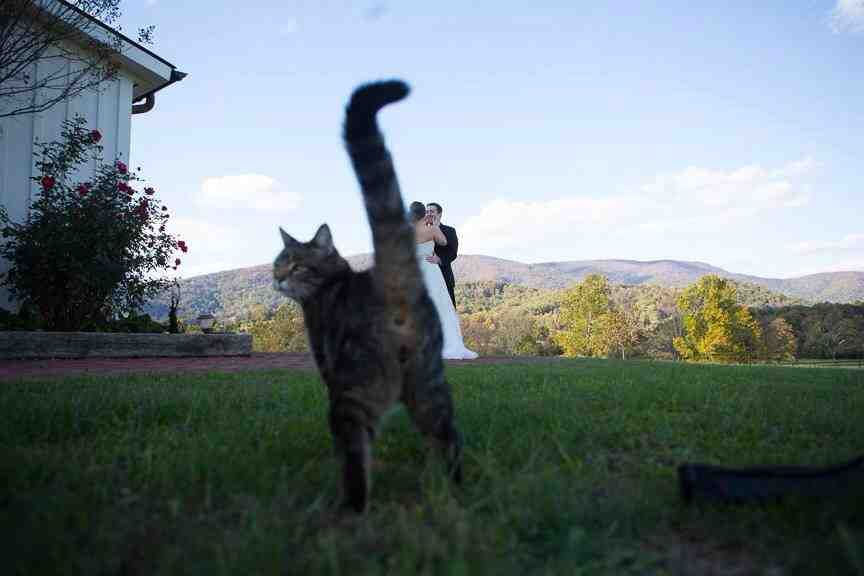 Wedding photo outdoors barn cat = awesome photo