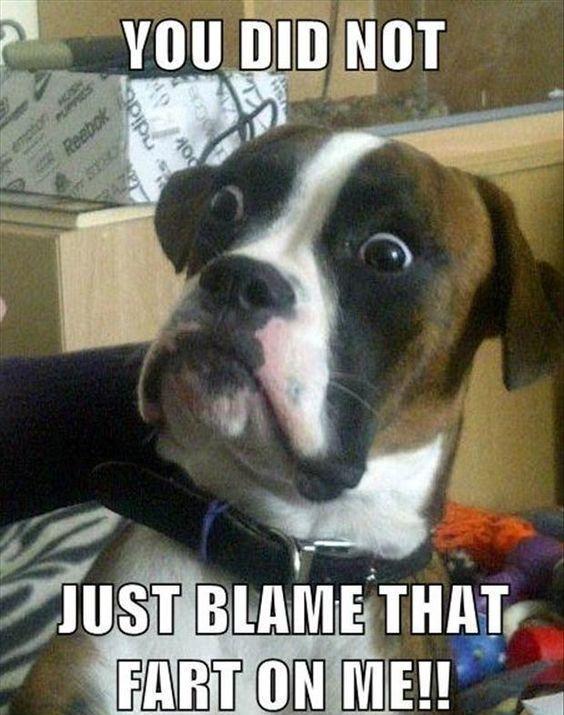Blame That Fart dogsfunnyfart Funny Dogs Pinterest