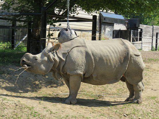 Toronto Zoo pavillon Afrique