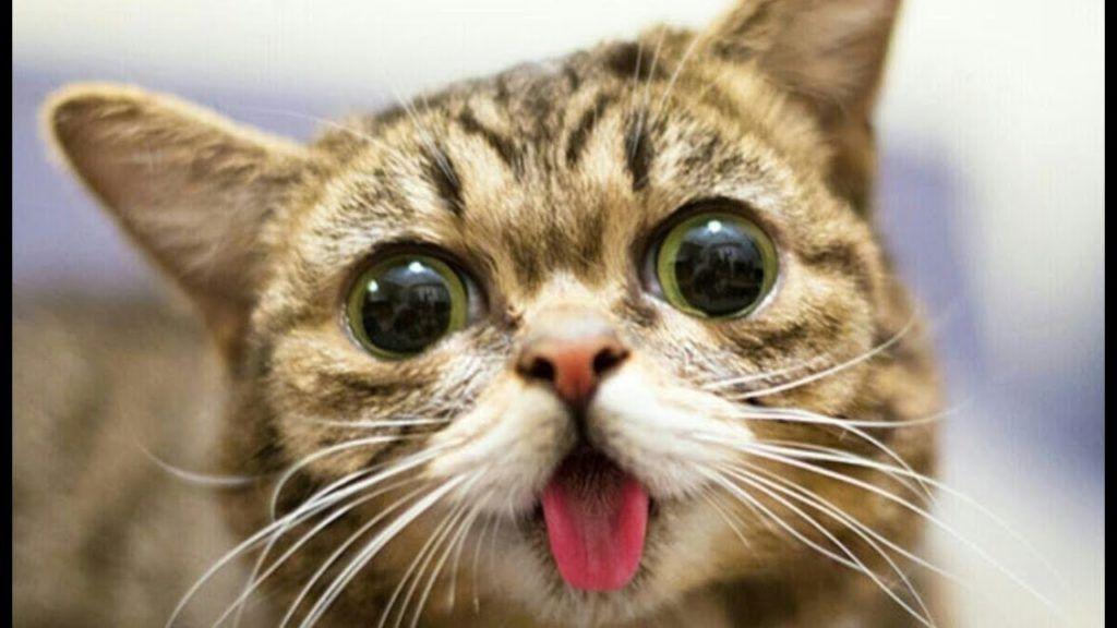 Most Funny Cat Videos pilation