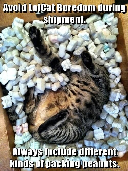 Cats boxes funny packing peanuts