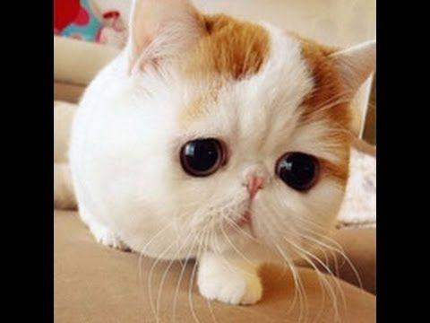 funny cats videos funny cats videos 2014 cat videos