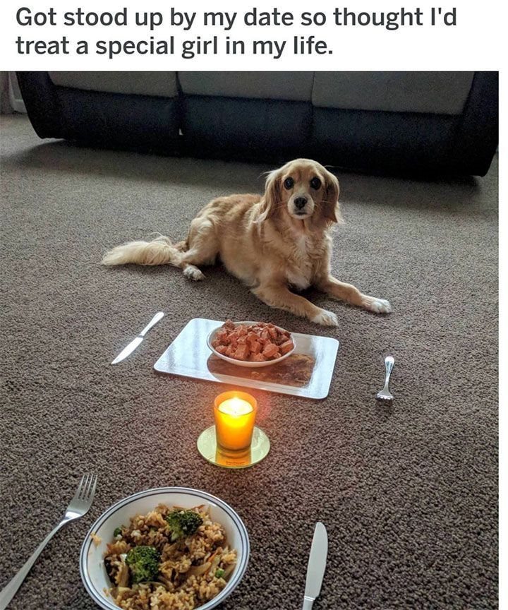 Hilarious Dog Memes That Will Cure Your Bad Day 19