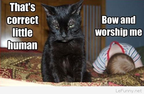 Funny black cat picture with text