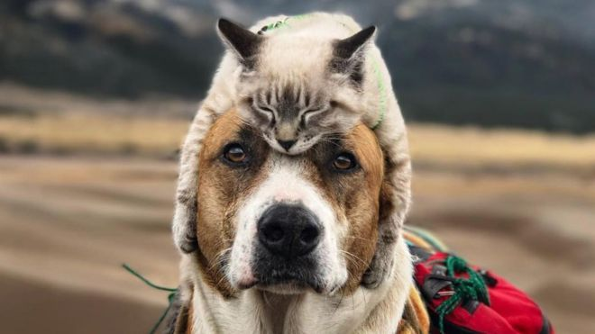 Cat asleep on top of dog s head with dog looking into camera