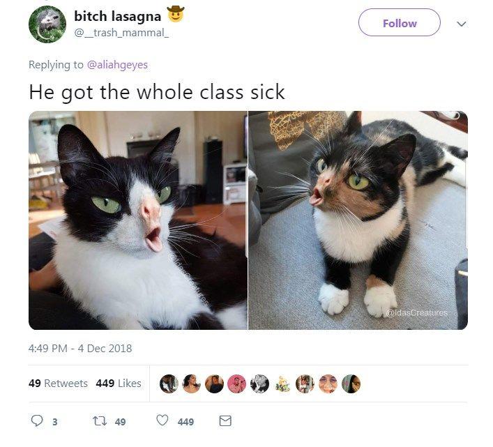 coughing cat meme 09